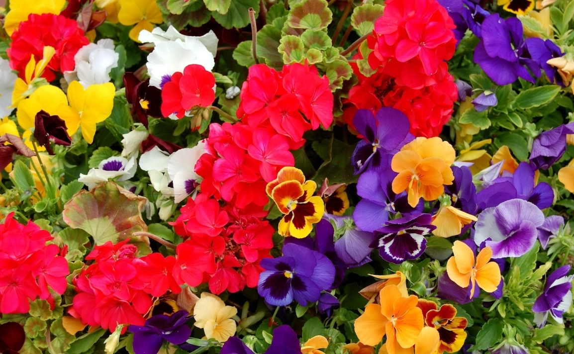 Mother's Day Plant Sale: May9!