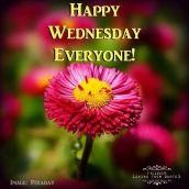 Happy-Wednesday-Everyone
