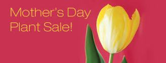 Mother's day plasnt sale 2