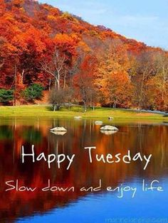 Happy Tuesday - Slow down & enjoy life illustration