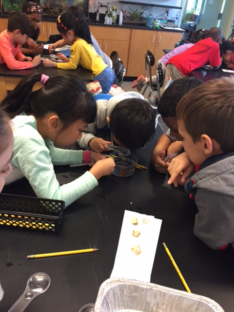 Scientists in action during ScienceLab