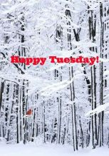 happy tuesday winter with red letters